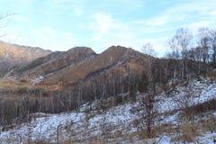 Cammello della montagna altai Fotografia Stock