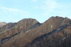Cammello della montagna altai Fotografia Stock Libera da Diritti