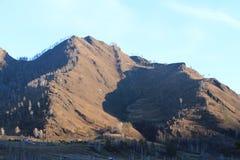 Cammello della montagna altai Fotografie Stock