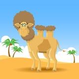 Cammello in deserto illustrazione vettoriale