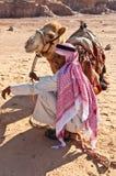 Cammello e beduino nel deserto Fotografia Stock
