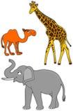 Cammello, giraffa ed elefante Fotografia Stock Libera da Diritti