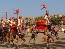 Cammello giusto, Jaisalmer, India Immagine Stock Libera da Diritti