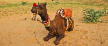 Cammello nel deserto del Ragiastan Fotografie Stock Libere da Diritti