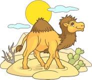 Cammello sveglio che cammina attraverso il deserto Immagine Stock