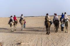 Cammello Tunisia Immagine Stock