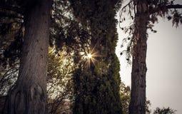 Camminando alla foresta Fotografia Stock