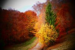 Camminando alla foresta nel tempo di autunno Fotografia Stock