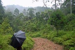 Camminando attraverso la foresta pluviale di Sinharaja del sito del patrimonio mondiale dell'Unesco in Sri Lanka Fotografia Stock