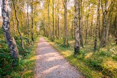 Camminando attraverso le foreste dell'isola del Wadden di Schiermonnikoog Fotografie Stock