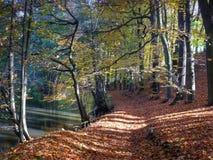 Camminando in autunno Immagine Stock