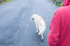Camminando con il cane un giorno piovoso di autunno fotografia stock libera da diritti