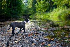 Camminando con il migliore amico Fotografie Stock
