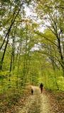 Camminando con un cane nella foresta di autunno immagine stock libera da diritti