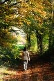 Camminando da solo nella foresta Fotografia Stock Libera da Diritti