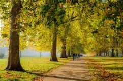 Camminando e pareggiare su un albero hanno allineato il percorso a Hyde Park Fotografie Stock Libere da Diritti