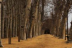 Camminando fra gli alberi fotografia stock