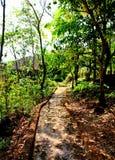 Camminando giù una traccia della foresta Immagini Stock