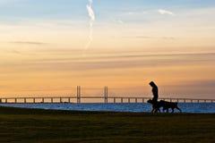 Camminando i cani Fotografie Stock Libere da Diritti