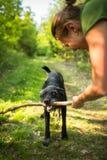 Camminando il cane fotografie stock libere da diritti