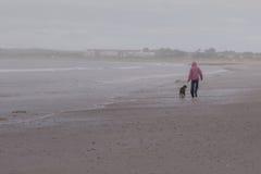 Camminando il cane Immagini Stock