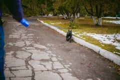 Camminando il cane Immagini Stock Libere da Diritti