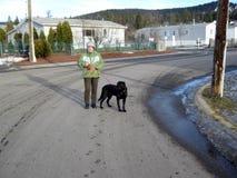 Camminando il cane nell'orario invernale immagine stock