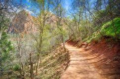 Camminando in legno dell'Utah Fotografia Stock