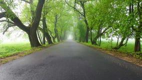 Camminando lungo il vicolo verde il giorno nebbioso stock footage