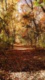 Camminando in natura Immagini Stock