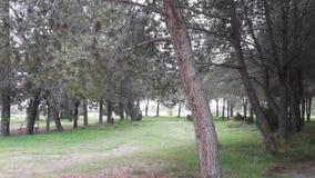 Camminando nel parco accanto al lago di sale Larnaca Cipro fotografia stock libera da diritti