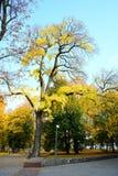 Camminando nel parco del quadrato della cattedrale nella città di Vilnius Immagini Stock