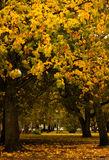 Camminando nel parco di autunno in vecchia città Fotografie Stock