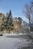 Camminando nell'inverno fotografia stock