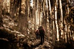 Camminando nella foresta fotografia stock libera da diritti