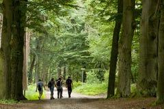Camminando nella foresta fotografia stock