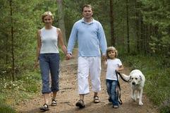 Camminando nella foresta Fotografie Stock Libere da Diritti