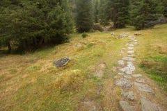 Camminando nella foresta lungamente un percorso in un giorno nuvoloso Nessuna gente intorno Fotografie Stock