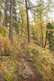 Camminando nella foresta lungamente un percorso in un giorno nuvoloso Nessuna gente intorno Immagine Stock