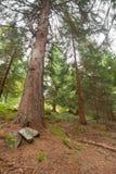 Camminando nella foresta lungamente un percorso in un giorno nuvoloso Fotografia Stock Libera da Diritti
