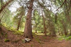 Camminando nella foresta lungamente un percorso in un giorno nuvoloso Fotografie Stock Libere da Diritti