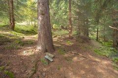 Camminando nella foresta lungamente un percorso in un giorno nuvoloso Immagini Stock Libere da Diritti