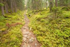 Camminando nella foresta lungamente un percorso in un giorno nuvoloso Nessuna gente a Fotografie Stock Libere da Diritti