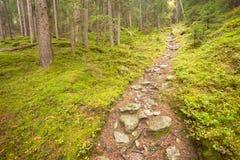 Camminando nella foresta lungamente un percorso in un giorno nuvoloso Nessuna gente a Immagine Stock