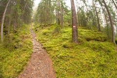 Camminando nella foresta lungamente un percorso in un giorno nuvoloso Nessuna gente a Immagini Stock Libere da Diritti