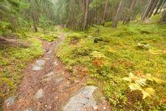 Camminando nella foresta lungamente un percorso in un giorno nuvoloso Nessuna gente a Immagini Stock
