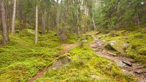 Camminando nella foresta lungamente un percorso in un giorno nuvoloso Nessuna gente a Fotografie Stock