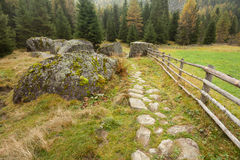 Camminando nella foresta lungamente un percorso in un giorno nuvoloso Nessuna gente a Fotografia Stock