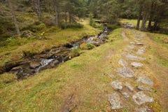 Camminando nella foresta lungamente un percorso in un giorno nuvoloso Nessuna gente a Immagine Stock Libera da Diritti