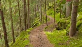 Camminando nella foresta lungamente un percorso in un giorno nuvoloso Nessuna gente a Fotografia Stock Libera da Diritti
